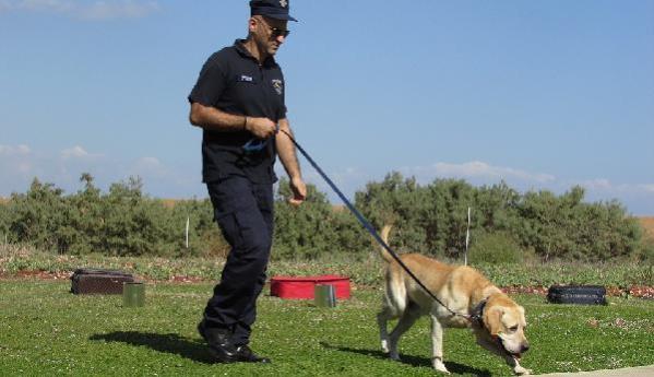 ABD'deki Nascar yarışında köpekler Kovid-19 taraması yapacak